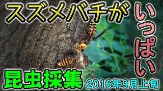 全然ダメっす。 【昆虫採集2016 プレイリスト】 https://www.youtube.co...
