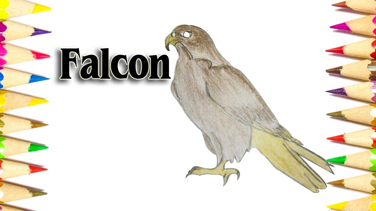 how to draw a falcon easy