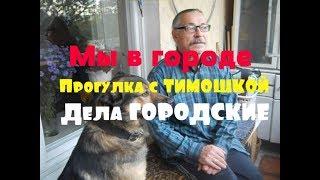 В поисках ЖИЛЬЯ // Прогулка с собакой