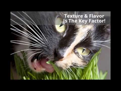 The Two Reasons Why Dogs & Cats Eat Grass