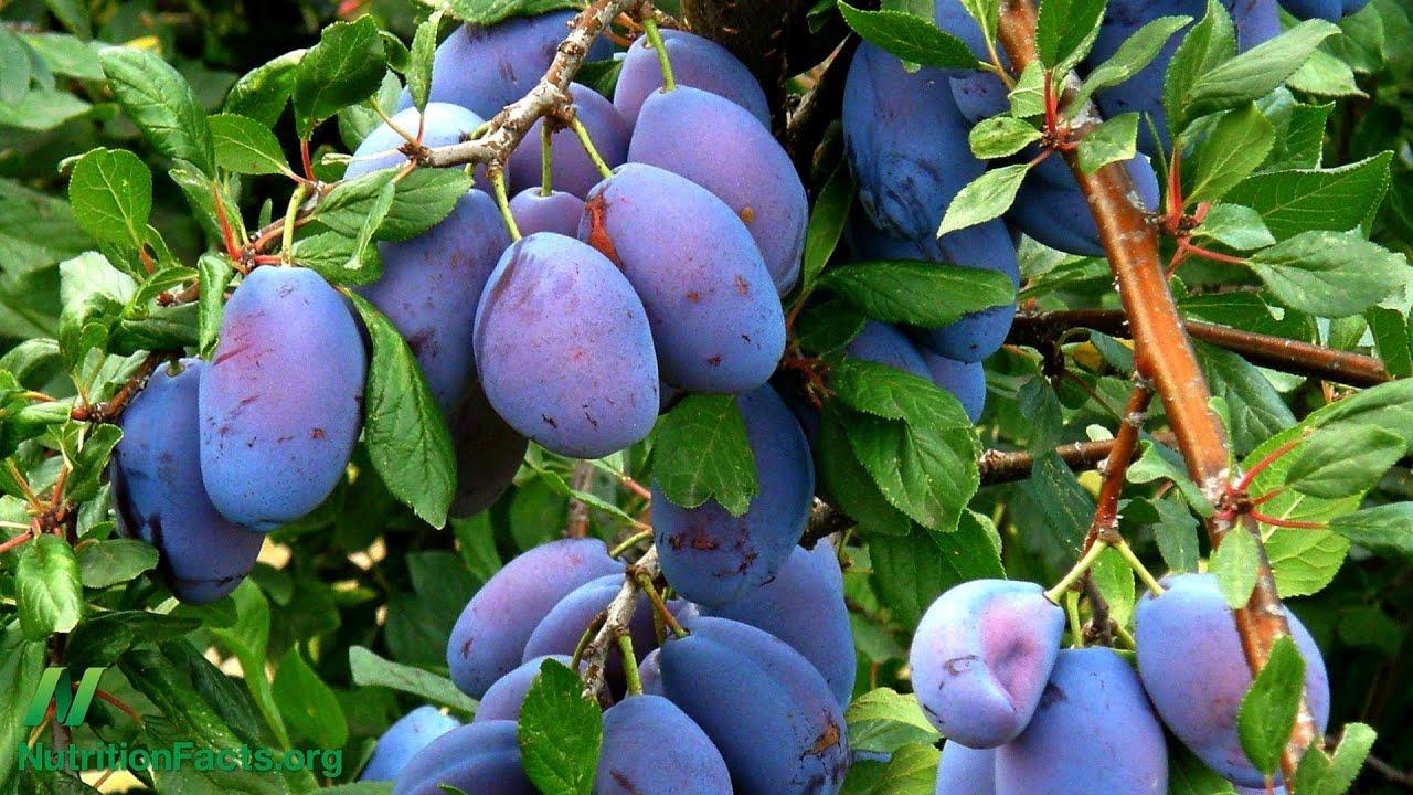 Prunes vs. Metamucil vs. Vegan Diet