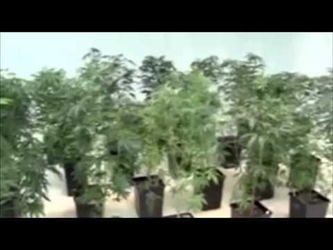 Medical marijuana growers setting up shop in NE D.C.