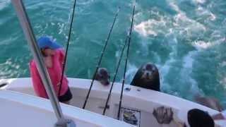 Cabo Fishing: Feeding a Sea Lion