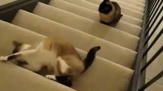 חתולנובלה פרק 5
