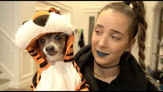 Download My Dogs Try On Halloween Costumes 2 Mp3 and Videos
