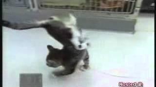 кот на передних лапах