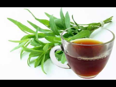Tarragon Tea Health Benefits
