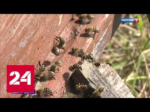 Медовый кризис: пестициды