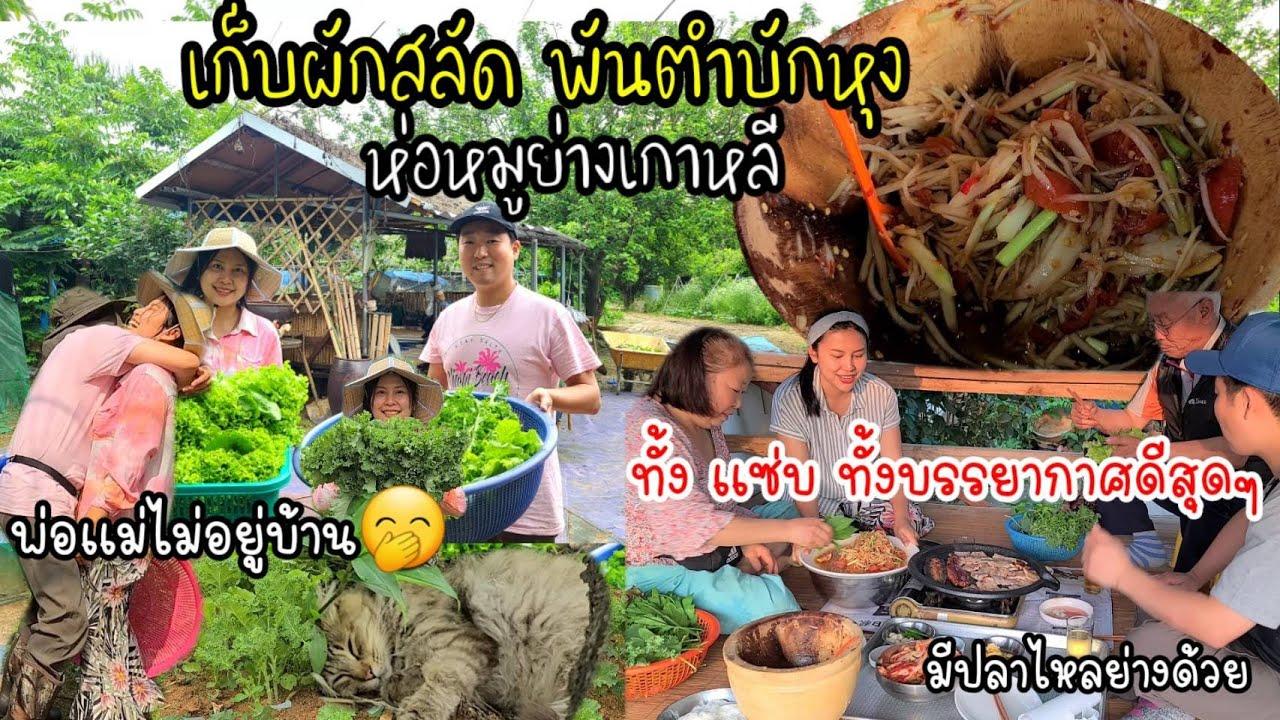 EP.526 เก็บผักสลัดหมดสวน พันส้มตำห่อหมูย่างเกาหลี กินตอนเย็นบนเถียงนา พร้อมพระอาทิตย์สาดส่อง ฟินจัง