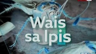 Good News: Wa-is sa mga Ipis!