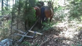 Konji vuku trupac....