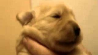 cute puppy whistle.mp4