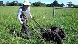 Video Cutting grass and weeds with Allen Oxford Auto Scythe download MP3, 3GP, MP4, WEBM, AVI, FLV Agustus 2018