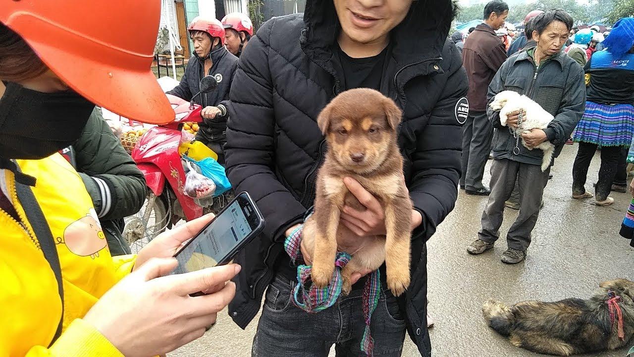 Chợ chó Bắc Hà 19/1: tết bán chó con, chó xù,  chó đỏ, chó cộc.