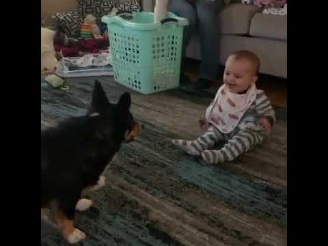 The Randy, Jamie and Jojo Show  - Dog Jumps Around Baby Excitedly Making Him Laugh Hysterically