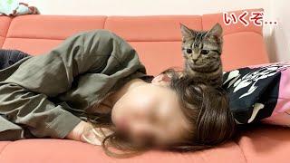 寝落ちした美人飼い主に攻撃をくらわせてしまった子猫w