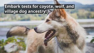 Embark Dog DNA Test Review: Is Embark Worth It? thumbnail
