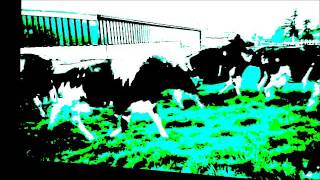 Chips (music for a cow