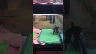 Бешеная собака укусила Сашу!