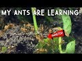 OMG! MY ANTS ARE LEARNING!