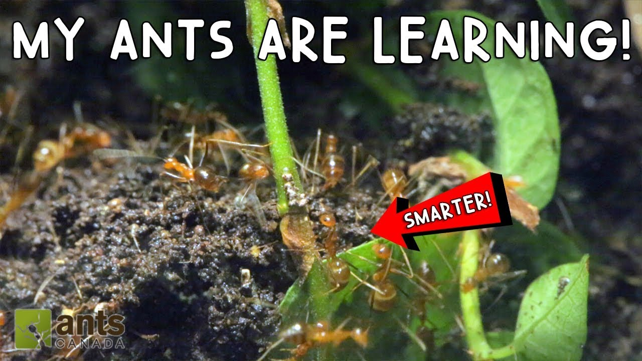omg-my-ants-are-learning