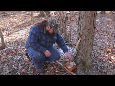 Gathering maple sugar the traditional Anishinaabe way