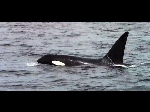 Chris' Fishing and Whale Watching Monterey California