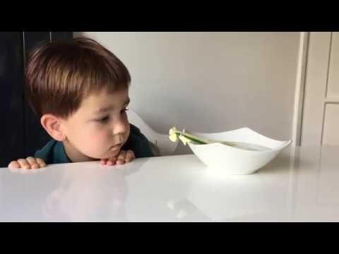 Kids Science: Testing heat conduction