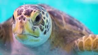 Tacoma Report Pacific Seas Aquarium Opening 9-1-18