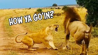 Ozzy Man Reviews: Dodgy Lion Moves