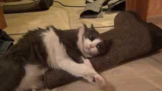 Кошка. Cat compilation (2014) подборка котов (2014 - 1я часть)