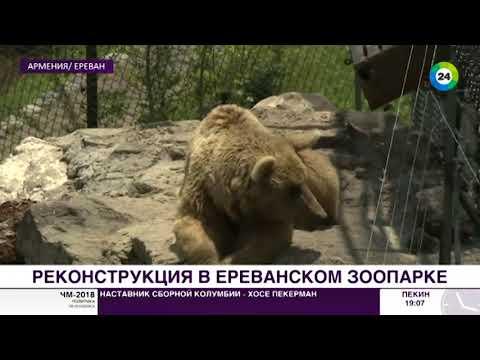 Ереванский зоопарк освободил животных из клеток
