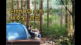 제주도 숲속 캠핑 l 제주 자연휴양림 l 편백나무 숲 …