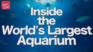 Inside the World's Largest Aquarium | Chimelong | A China Icons Video