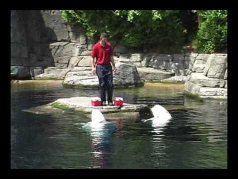 Stanley Park  Aquarium,   Vancouver
