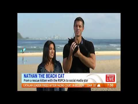 Nathan the Beach Cat's live Breakfast TV Appearance!
