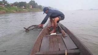 khong river fish(ปลาน้ำโขงจำปาสัก)