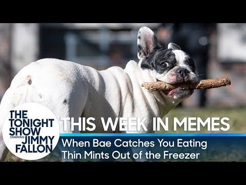 This Week in Memes: When Bae Catches You Eating Thin Mints out of the Freezer