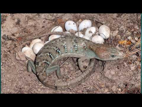 Những Loài Động Vật Sinh Con Mà Không Cần Giao Phối
