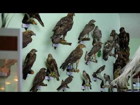 Музей в Белгородской области / Музей природы в деревнях России