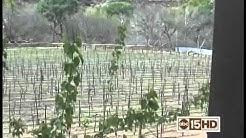 Tour the Arizona Wine industry