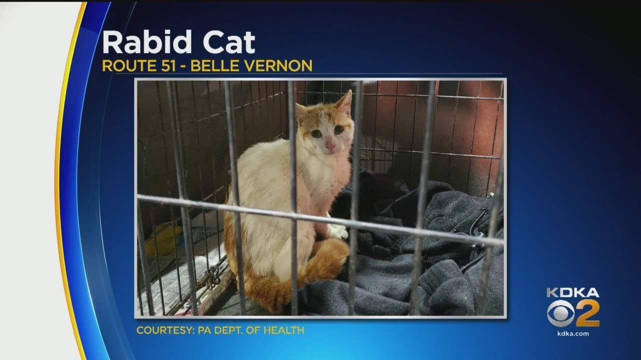 Westmoreland County Rabid Cat Found
