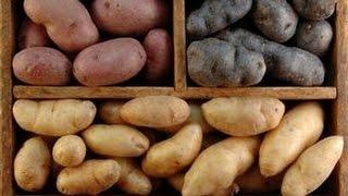 видео Как правильно хранить картофель