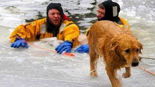 People saving Dogs Life - Amazing People Compilation 2018