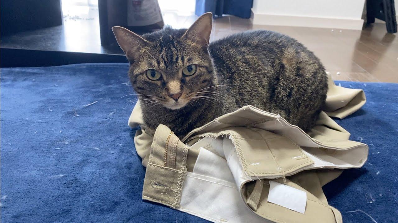 実家猫の匂いがするズボンが大好きな凶暴猫がこちらです...