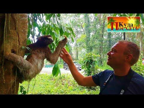 ПОЗДОРОВАЛСЯ С ЛЕНИВЦЕМ!!!😃Центр реабилитации животных «ЯГУАР» КОСТА РИКА. ПУЭРТО ВЬЕХО #27