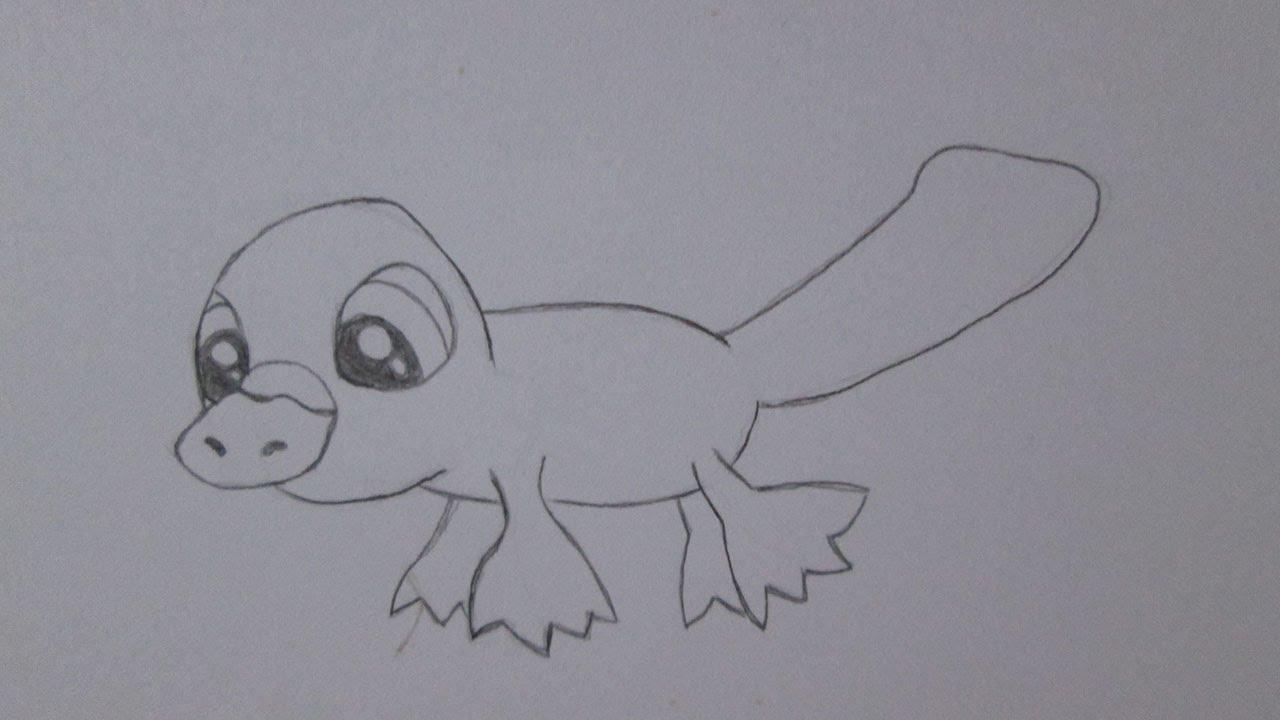 Cómo dibujar un ornitorrinco - YouTube