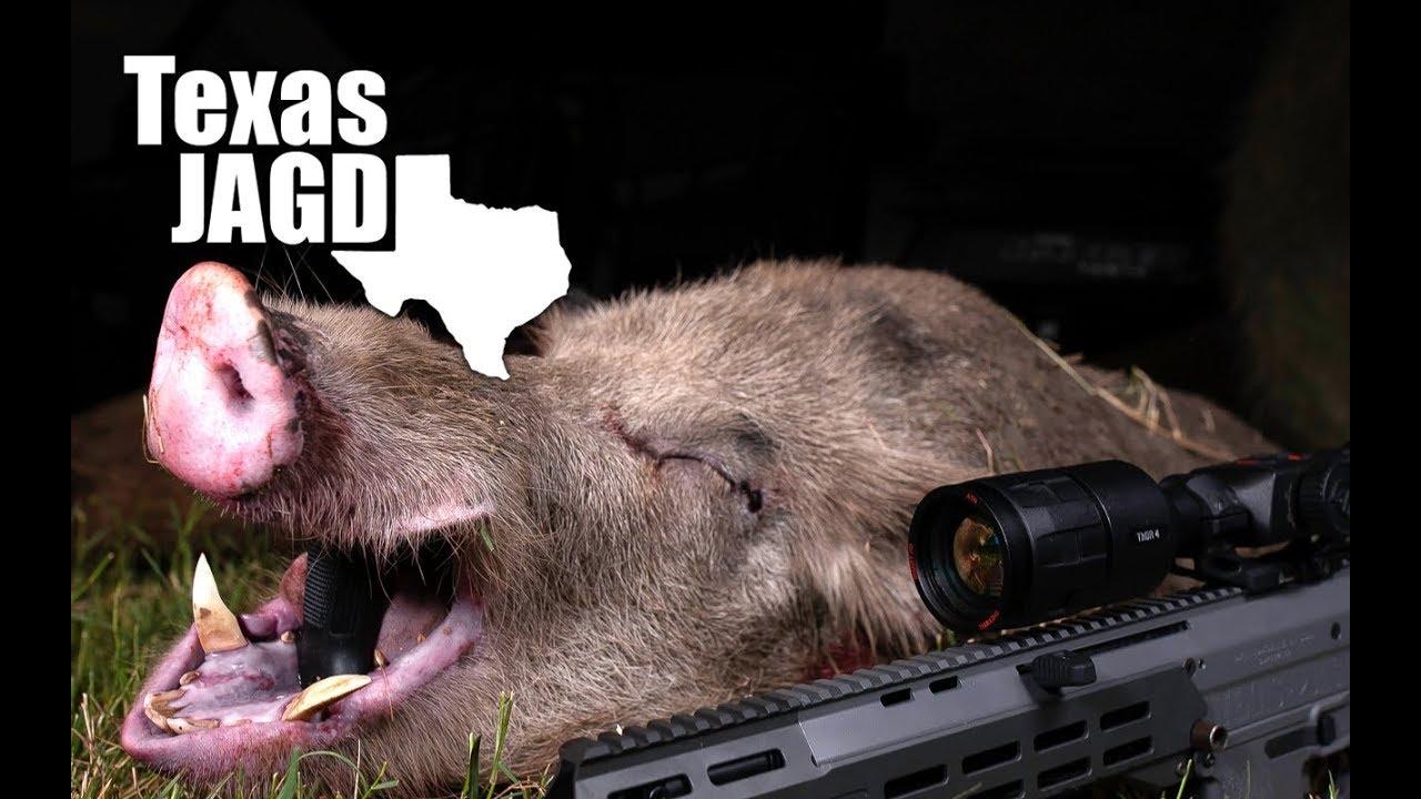 Triple Boars – Wild Hog Cutters – Texas Thermal Hog Hunting