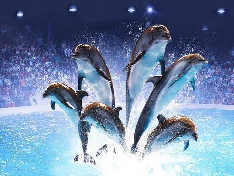 Dubai dolphinarium Dolphin 🐬 show