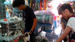 Сушка тайской собаки